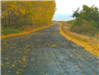 Rural Area Road With Yellow Leaves
