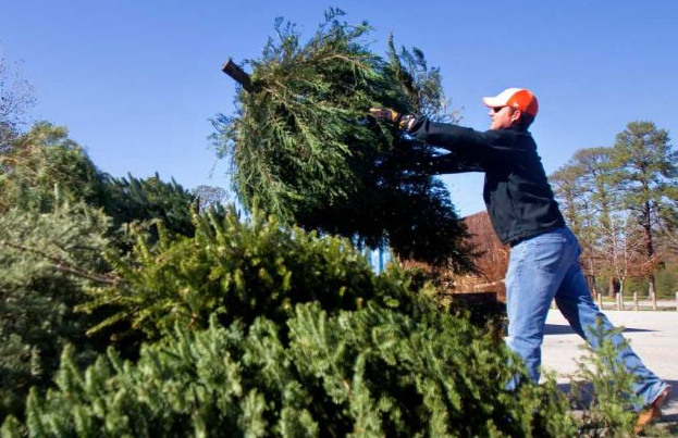 Christmas tree removal