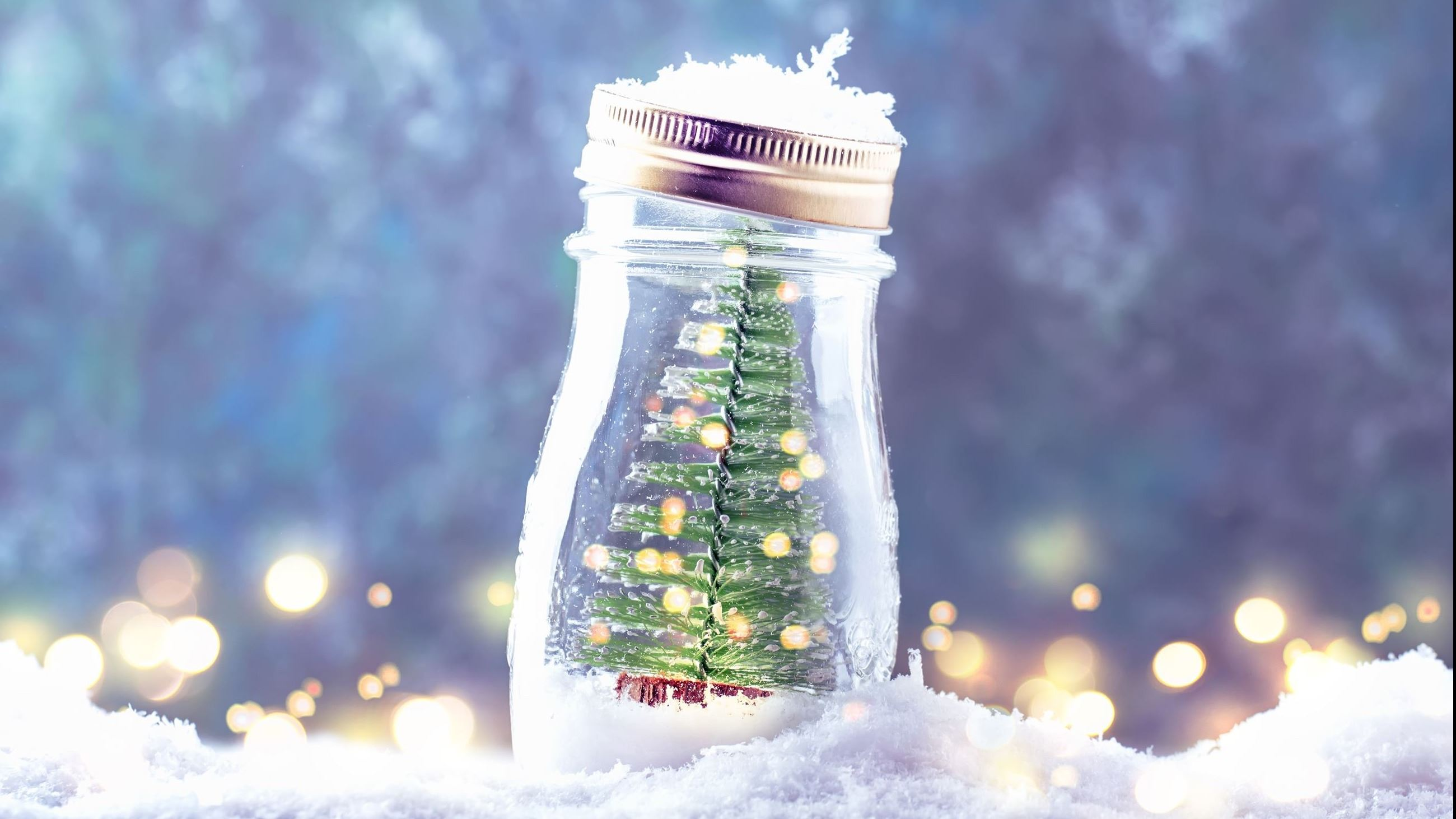 Evergreen tree in a jar sitting in the snow