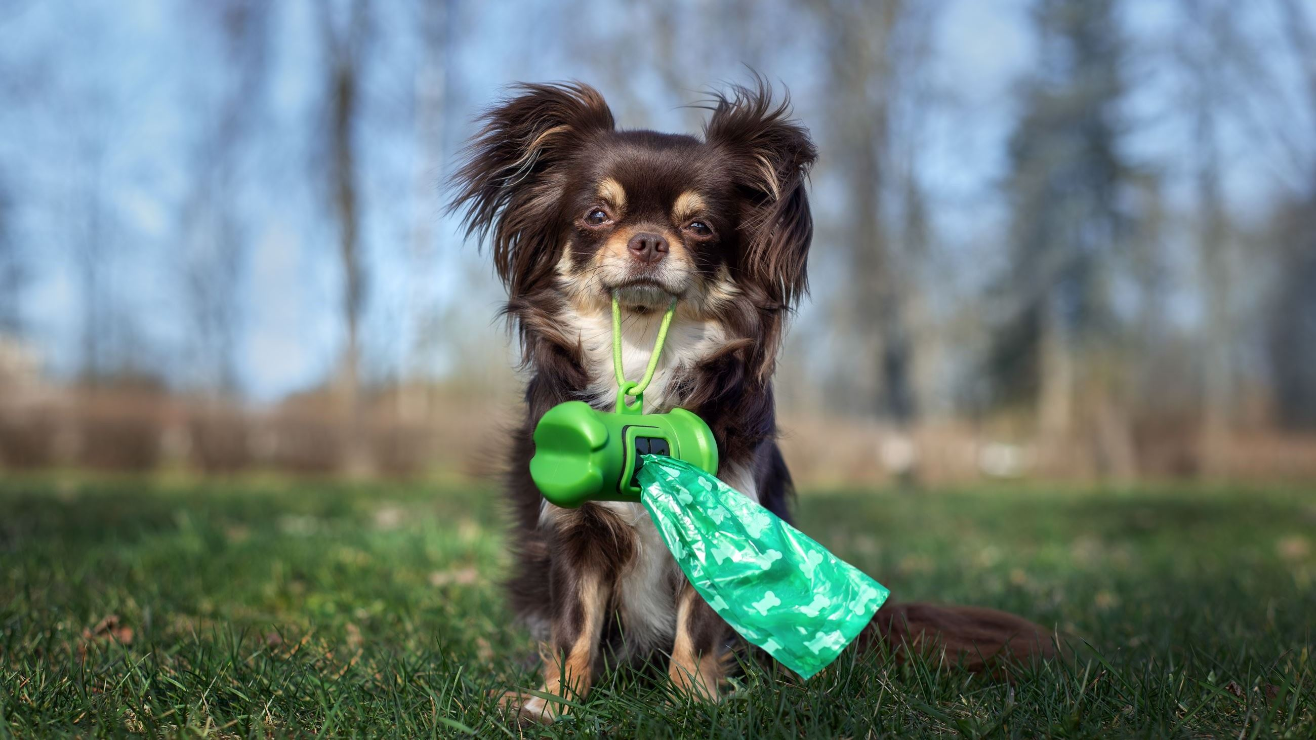 Dog with poop bag AdobeStock_267984367