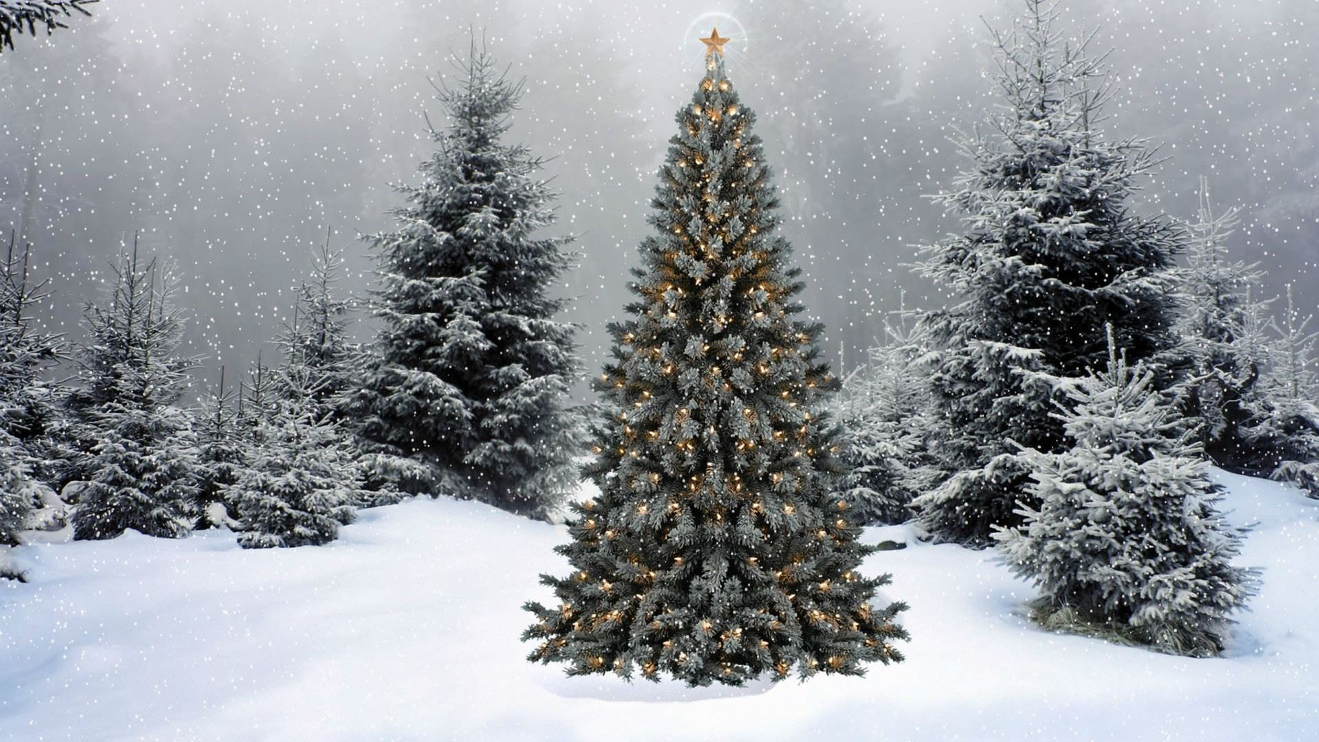 outdoor Christmas Tree in Snow